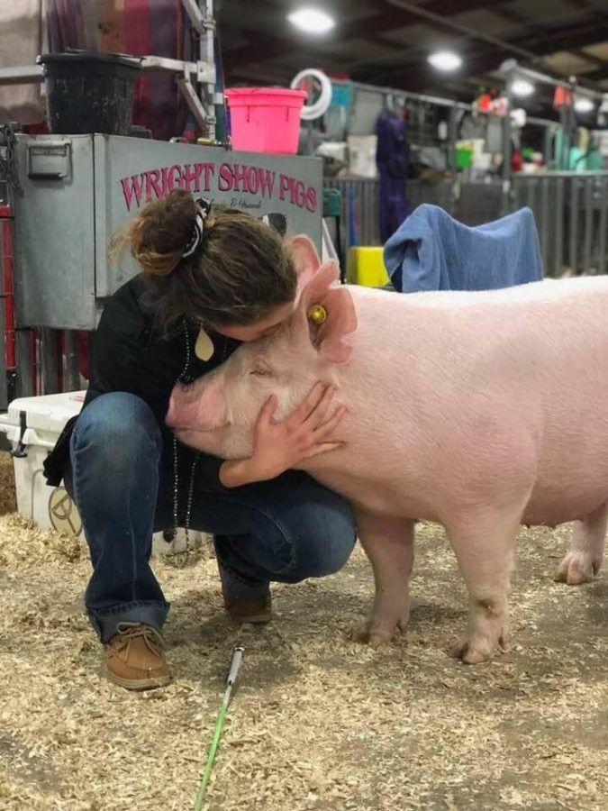 """Junior Victoria Juarez gives her gilt named """"Cow"""" a kiss before heading into the ring."""